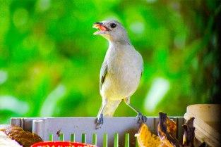 birds1-1